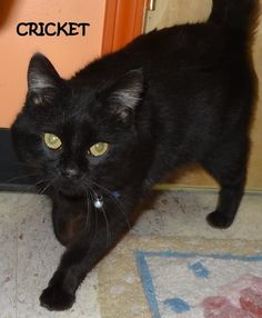 ADOPTED!  Tag# 8061 Name is Cricket Black Male-not neutered Friendly guy, gorgeous!   Located at 2396 W Genesee Street, Lapeer, Mi. For more information, please call 810-667-0236. Adoption hrs M-F 9:30-12:00 & 12:30-4:15, Weds 9:30-12:00 & Sat 9:00-2:00  https://www.facebook.com/267166810020812/photos/a.824038914333596.1073742143.267166810020812/824039314333556/?type=3&theater