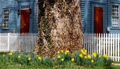 """#SpringinCT #CenterofCT """"Center of CT photo contest"""""""