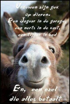 Hete Ebony ezels