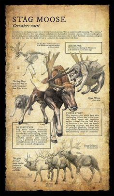 Design and Illustration for extinct, prehistoric animal specimens and fossils, natural history museum signage. Prehistoric Wildlife, Prehistoric World, Prehistoric Creatures, Mythological Creatures, Magical Creatures, Fantasy Creatures, Dinosaur Art, Extinct Animals, Cryptozoology