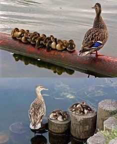 Ideas photography nature animals sweets for 2019 Pretty Birds, Beautiful Birds, Animals Beautiful, Beautiful Family, Nature Animals, Farm Animals, Animals And Pets, Wild Animals, Cute Baby Animals