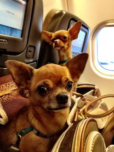 Dogs travel