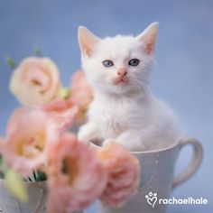 Rosey (Moggy ) - No matter what Rosey is up to, she always finds time to stop and smell the roses.