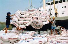 Xuất khẩu Gạo Campuchia đang trên đà tiến lên thế giới - Du Lịch Campuchia. Không ký được hợp đồng xuất khẩu lớn ở các thị trường truyền thống, gạo Việt Nam bí đầu ra. Tại thị trường trong và ngoài nước, gạo Thái Lan vẫn ở đẳng cấp cao, còn gạo Campuchia ngày càng tiến lên khẳng định vị thế. Còn Việt Nam đang tụt lại và có nguy cơ mất vị trí thứ ba thế giới về xuất khẩu gạo.