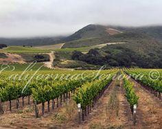 Visit a California Vinyard