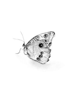 Giclee art print of a pencil drawing of a Butterfly. by Zendrawing, €7.75