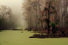 swamp near Waveland Mississippi