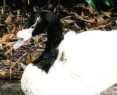 Photo ConchettaT Jacksonville Zoo, Horses, Flowers, Animals, Animales, Animaux, Animal, Animais, Royal Icing Flowers