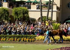 Crowd goes wild over special appearance from Triple Crown Champion American Pharaoh at Del Mar today 9/6/2015