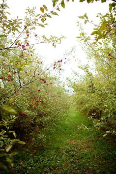 I want an orchard such as the ones L.M. Montgomery's girls got the run of in her books.