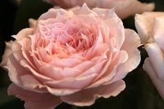 ~ My Fleur Journey ~