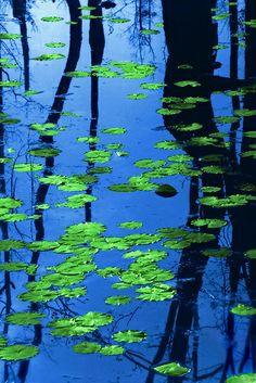 """""""Lily pads"""" by J. """"Lily pads"""" by J. Flowering just three months after …beautiful & mysterious – nature Foto Nature, All Nature, Green Nature, Verde Neon, Belle Photo, Mother Earth, Beautiful World, Nature Photography, Levitation Photography"""