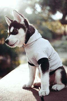 nothing cuter than a puppy in a hoodie.