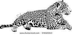 Find Black White Vector Sketch Lying Jaguar stock images in HD and millions of other royalty-free stock photos, illustrations and vectors in the Shutterstock collection. Thousands of new, high-quality pictures added every day.