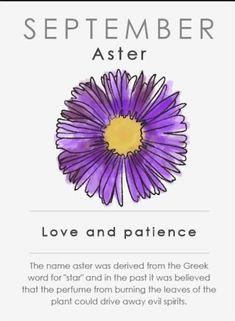 """flower drawing September Birth Flower - Each month has a flower that symbolizes it and the traits of each flower may be """"inherited"""" by those born then. What does your flower say about you? Aster Tattoo, Aster Flower Tattoos, Birth Flower Tattoos, 1 Tattoo, New Tattoos, Small Tattoos, Tatoos, Butterfly Tattoos, Foot Tattoos"""