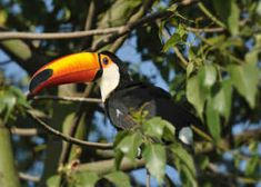 Costa Rica 360 FROM JFK $1,469 * PER PERSON 7 NIGHTS