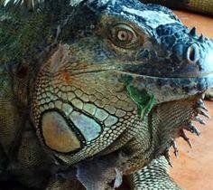 Costa Rica Costa Rica, Panama Cruise, Central America, Salvador, Mexico, Vacations, Corner, Travel, Animals