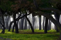 Pineta di Pineto by luciano dionisi, via Flickr