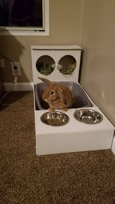 Taking Care Of Rabbits. Photo by karamsingh Rabbits can be cute and gentle pets but caring for them will require an understanding of their behavior. Diy Bunny Cage, Diy Bunny Toys, Bunny Cages, Rabbit Cages, Rabbit Toys, Pet Rabbit, Pet Bunny Rabbits, Bunnies, Indoor Rabbit Cage
