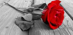 Want someone to become obsessed with you? This spell will increase the love interest that someone has in you. Facebook Cover Images, Facebook Timeline Covers, Timeline Cover Photos, Fb Cover Photos Unique, Cover Pics, Beautiful Red Roses, Red Rose Flower, Fb Covers, Love Rose