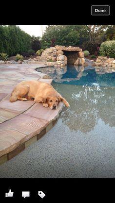 cool pool cute dog golden retriever