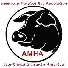 Mulefoot Hogs