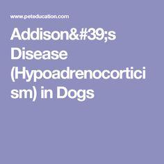 Addison's Disease (Hypoadrenocorticism) in Dogs