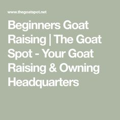 New to the world of goats? Have questions? This is the place to ask Goat Barn, Boer Goats, Baby Bottles, Raising