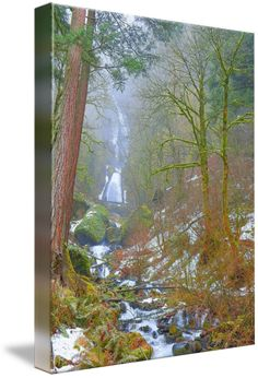 """""""The+Beauty+Of+Nature+Page+By+Page""""+by+Photography+Moments,+Boise+//+The+Beauty+Of+Nature+Page+By+Page,+Wahkeena+Falls+Winter+-+Columbia+River+Gorge+is+a+canyon+of+the+Columbia+River+in+the+Pacific+Northwest+//+Imagekind.com+--+Buy+stunning+fine+art+prints,+framed+prints+and+canvas+prints+directly+from+independent+working+artists+and+photographers."""