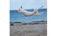 Flying Frieda