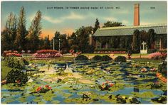 The Piper Palm House in Tower Grove Park. It is as beautiful now as it was in this postcard.