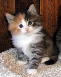I need a kitten.