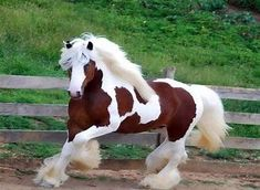 Image result for The Most Beautiful Horse Ever