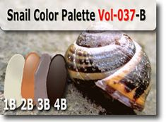 Snail Color Palette by Polymer Clay Tutor