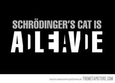 """""""The Schrodinger's cat paradox outlines a situation in which a cat in a box must be considered, for all intents and purposes, simultaneously alive and dead. Schrodinger created this paradox as a justification for killing cats."""""""