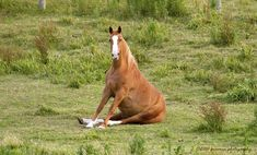 Funny Horse | Funny Horse | Flickr - Photo Sharing!