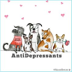 Antidepressants Red and Howling Animals And Pets, Funny Animals, Cute Animals, I Love Dogs, Cute Dogs, Dog Rules, Animal Quotes, Dog Art, Shih Tzu