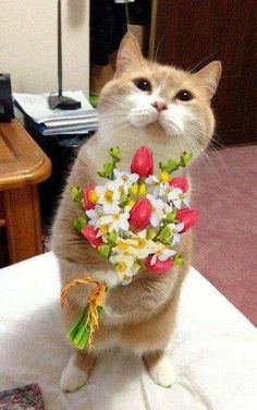 It's Caturday - Post Some Cats Animals And Pets, Baby Animals, Funny Animals, Cute Animals, Cute Cats And Kittens, I Love Cats, Kittens Cutest, Beautiful Love Pictures, Beautiful Cats