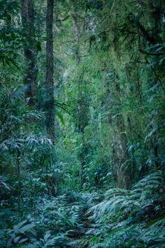 Green Mountains – Albert River Circuit ‹ Rainforest Images