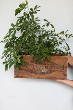 DIY decor planters