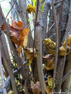 Листья тихо опадают на траву, Плачет осень золотая, я реву.