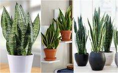 Cactus Plants, Diy And Crafts, Garden, Flowers, House, Projects, Garten, Home, Cacti