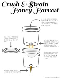 Crush and strain method for honey harvesting, how to! we have a honey extractor but this method is so easy for the home bee keeper,what I use now Harvesting Honey, Honey Extractor, Honey Bee Hives, Honey Bees, Beekeeping For Beginners, Raising Bees, Buzz Bee, Backyard Beekeeping, Honey Recipes