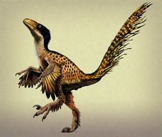 Feathered dinosaur despite a fraud there are numerous other examples of these dinos. Prehistoric Wildlife, Prehistoric World, Prehistoric Creatures, The Good Dinosaur, Dinosaur Art, Dinosaur Fossils, Feathered Dinosaurs, Dinosaur Pictures, Extinct Animals