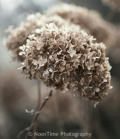 Natural by Esper7 | WHI