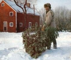 How to start a Christmas tree farm (anecdotal) from MEN.