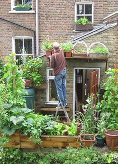 In north London, garden-less Mark Ridsill-Smith is practically self-sufficient in fruit and veg terms.  Every window ledge and balcony space of his Camden home is supporting some kind of edible plant life.