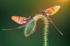 garden Photography Animals - Small wonders The winners of the Macro Art Photography awards. Photography Exhibition, Photography Awards, Photography Gallery, Film Photography, Macro Photography Tips, Animal Photography, Nature Photography, Micro Photography, Fishing Photography