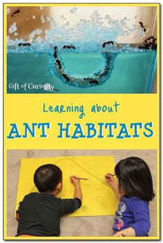 Activities for young kids to learn about ant habitats, including raising an ant farm, reading about ants, and drawing their very own ant city. #ants #handsonscience || Gift of Curiosity