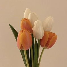 Plants Are Friends, Flower Power, Tulips, Bloom, Skate, Profile, Beautiful, Cover, Flowers